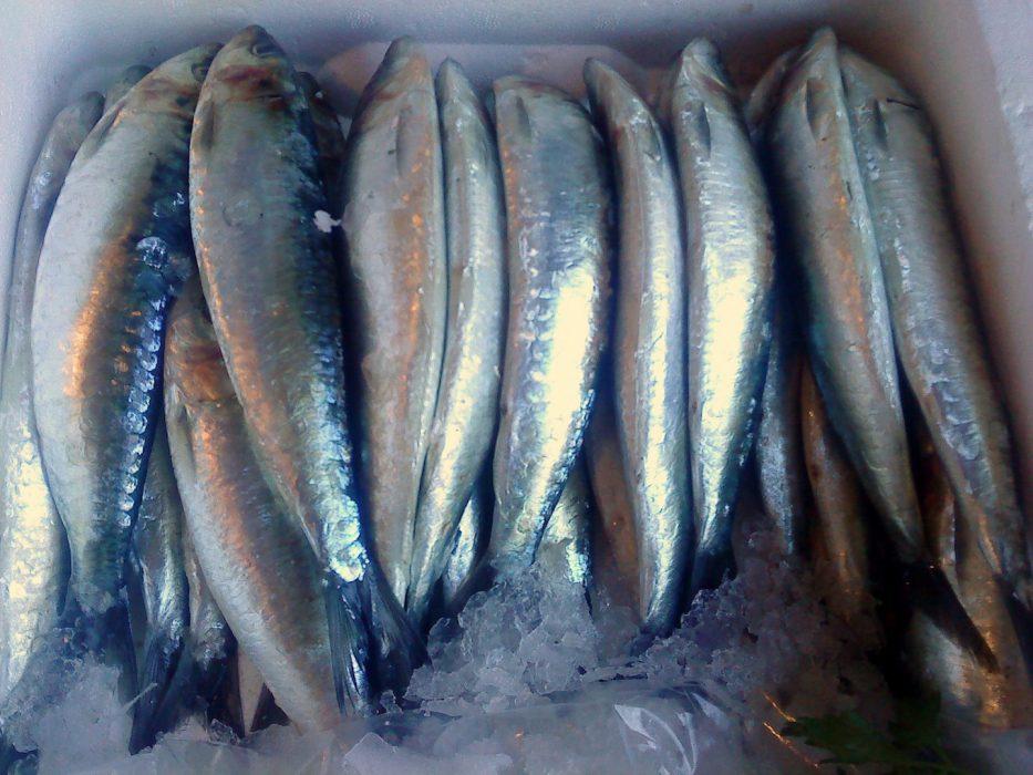 Pescado azul sardinas