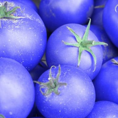 Tomates azules