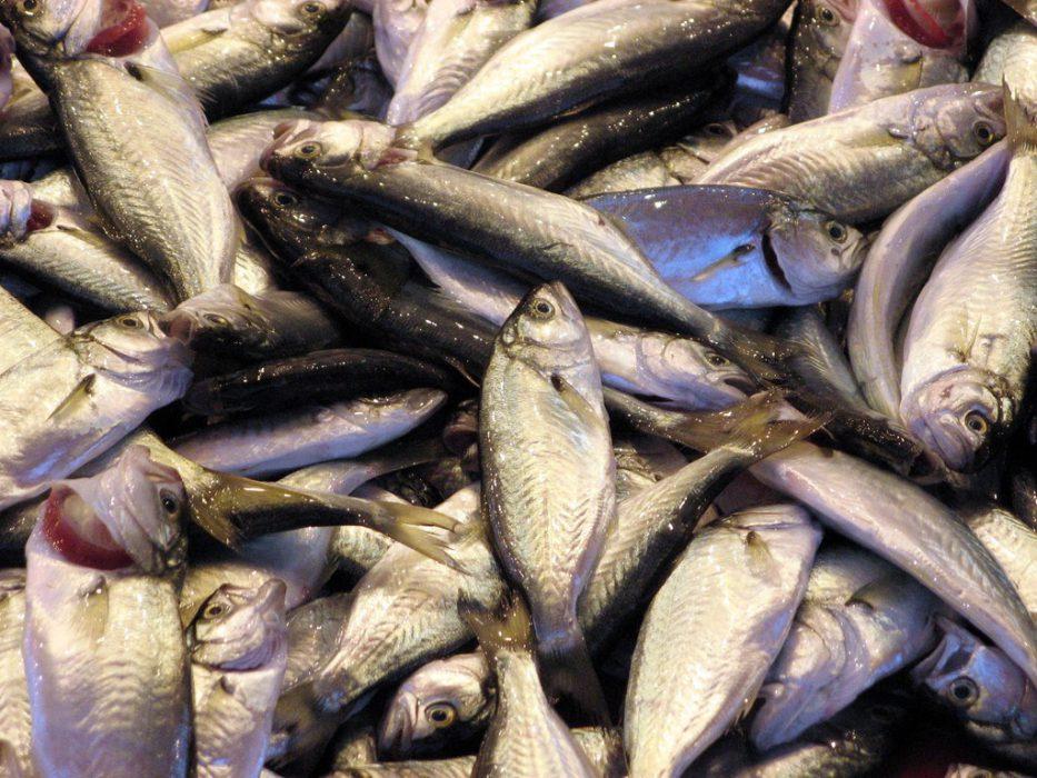 pescado crudo