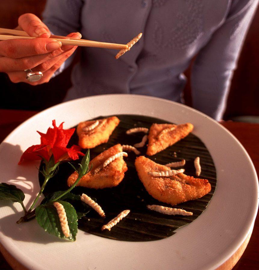 Clases de insectos en nuestra alimentación