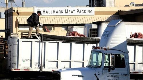 Hallmark/Westland Meat Packing Co.