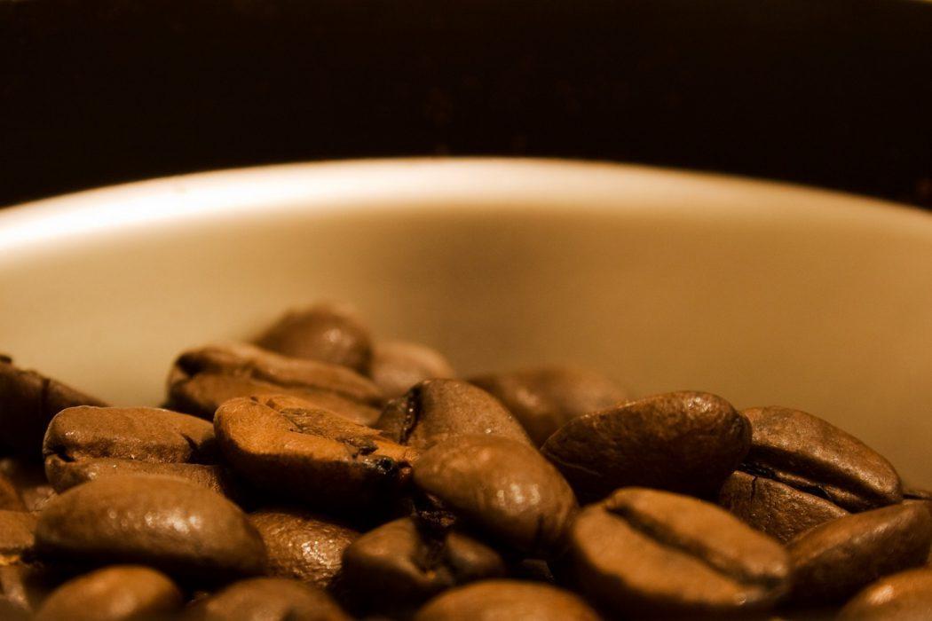 Kopi Luwak El café más caro del mundo (3)