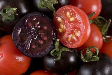 Tomates morados contra el cancer