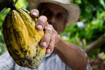 Producto de cacao
