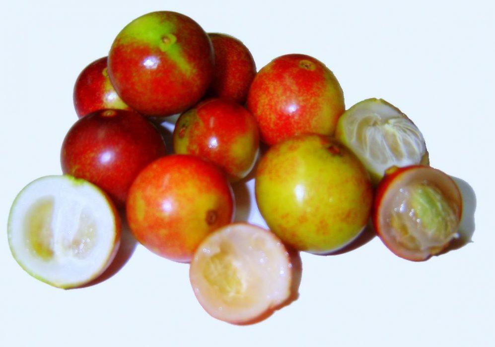 Camu Camu, una fruta llena de Vitamina C