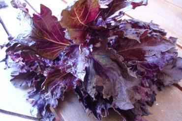 Albahaca púrpura o morada 2