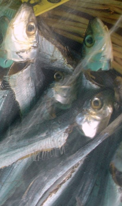 Pescado ahumado (2)