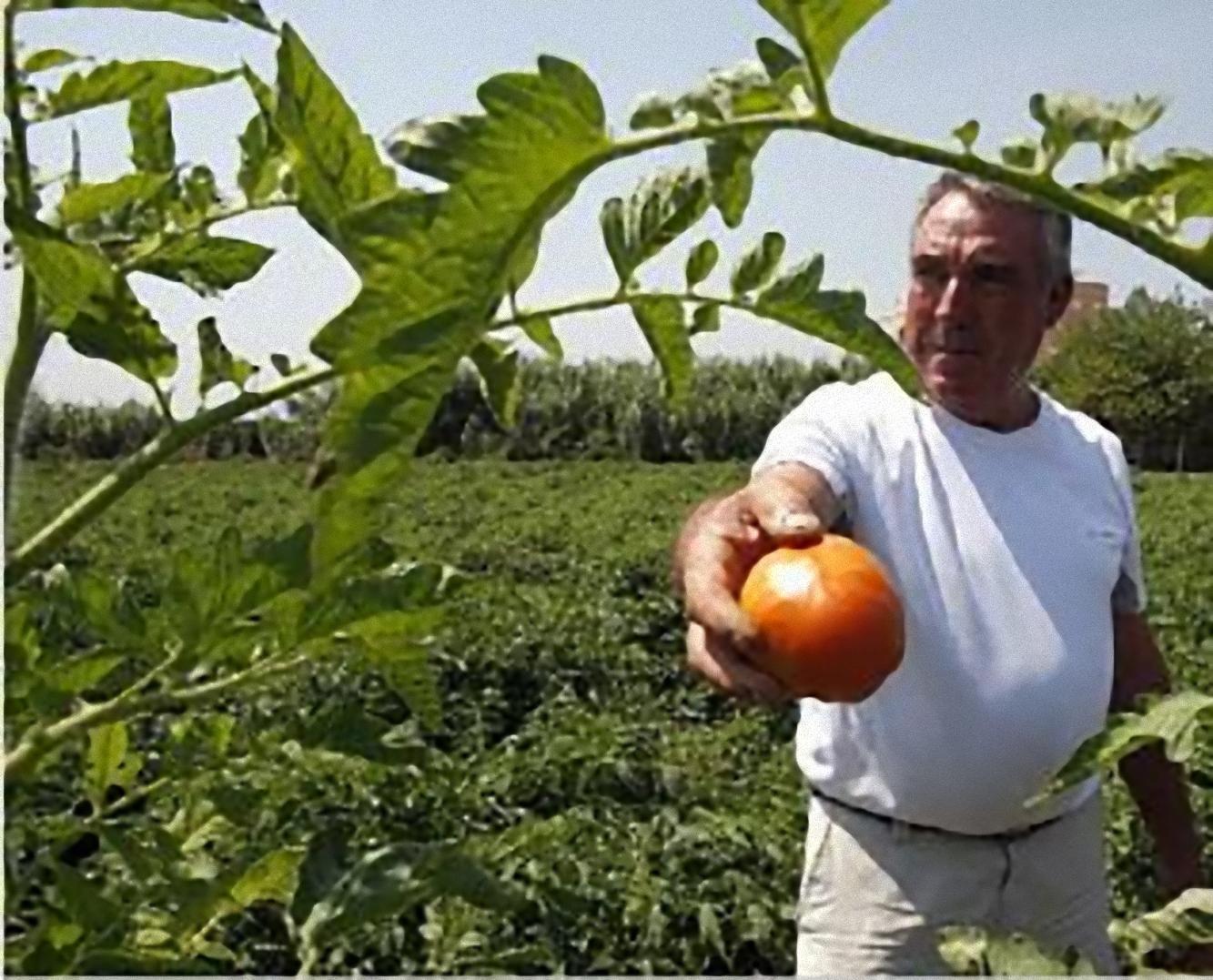 Francisco Ballester muestra un tomate cuarentena