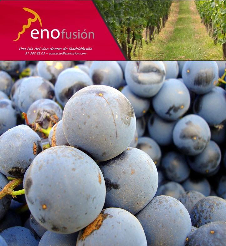 enofusion_2011