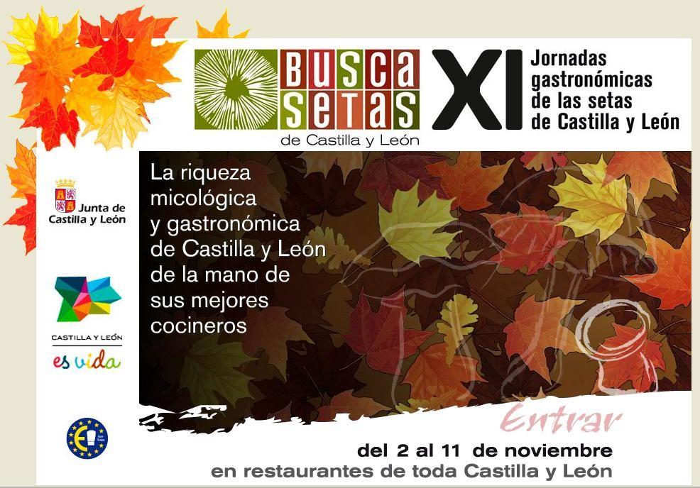 Busca Setas 2012 - logo