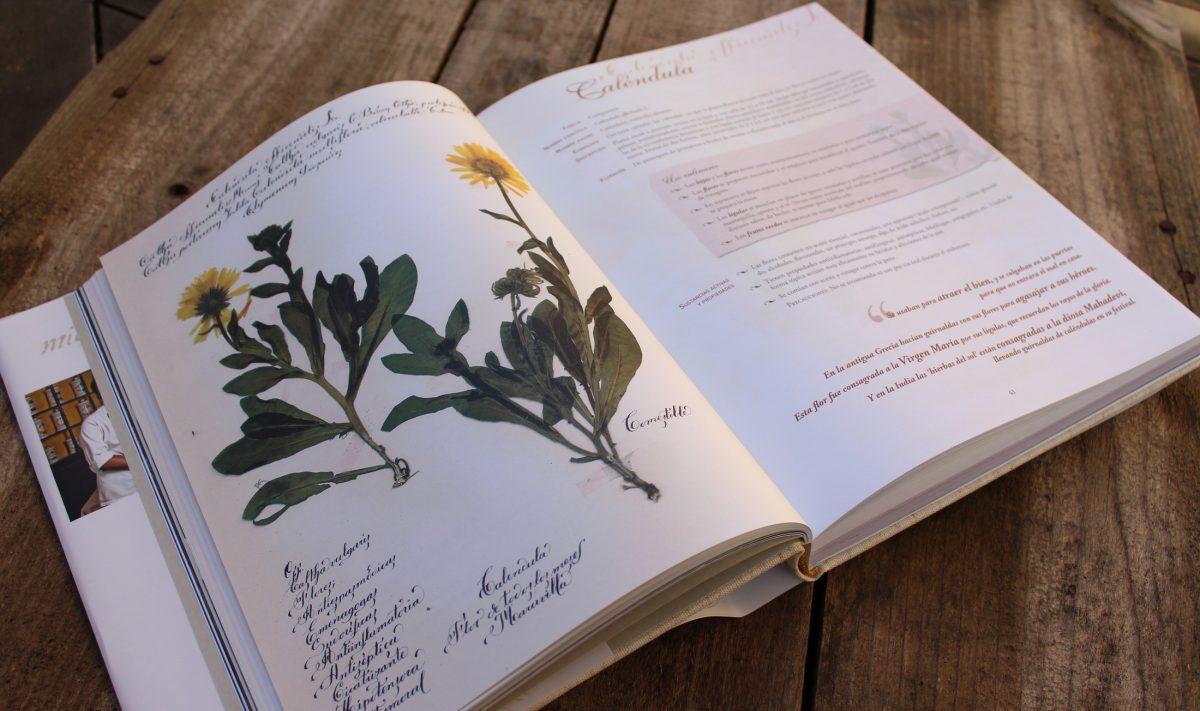 El Cocinero recolector y las plantas silvestres - Plantas