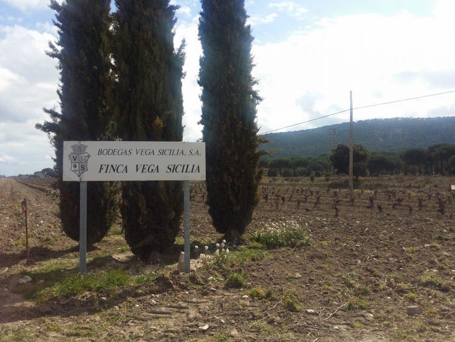 Viñedos Finca Vega Sicilia - Ribera del Duero
