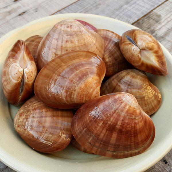 Una vez tenemos las almejas de concha fina en nuestra cocina, lo más frescas posible, lo primero de todo será limpiarlas.