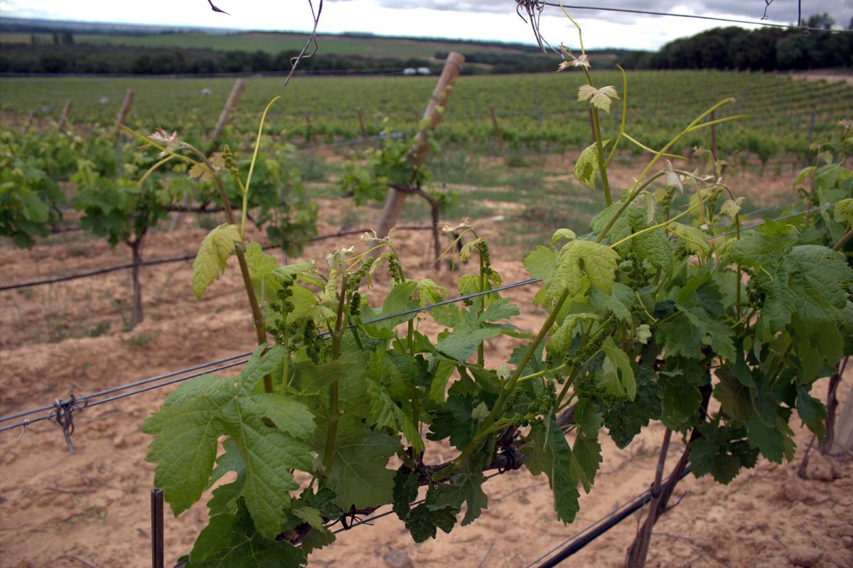 viñas pradorey