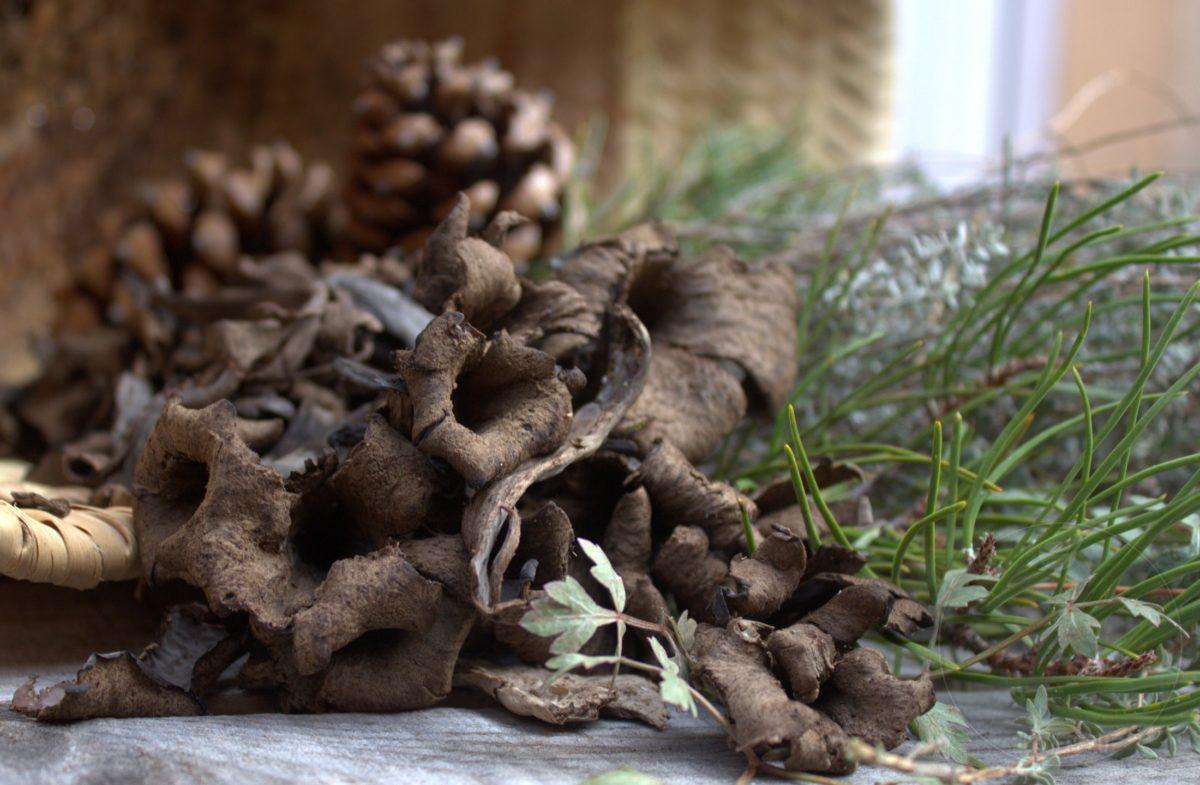 Trompetas de la muerte, delicias negras del bosque